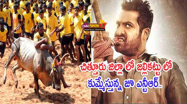 junior ntr jallikattu