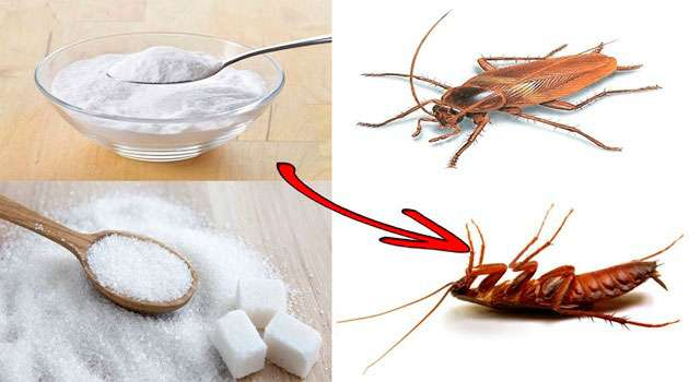 Home Remedies For Cockroach Control In Telugu