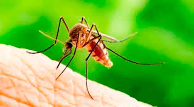 How to kill mosquitoes in telugu