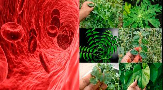 Blood platelet count Home remedies In Telugu